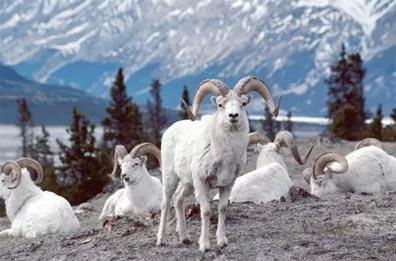 »Durch die Wildnis des Yukon und Alaskas: 15 Tage Wanderreise«
