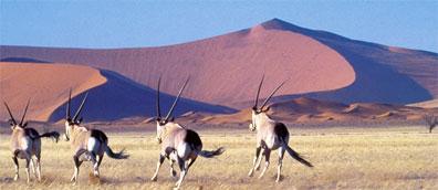 »Entdeckungsreise Namibia: 17-Tage-Erlebnisreise Namibia«