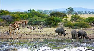 »Pirschfahrten im Mkuzi-Wildreservat: Nashörner beobachten«