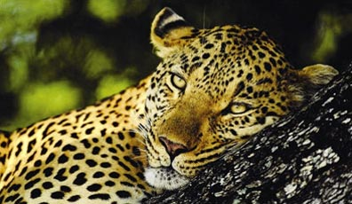 »Afrikas Perlen - Reise ab Johannesburg bis Kapstadt«