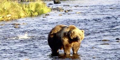 »Alaska für Genießer: Kurzreise zum Brooks Camp«