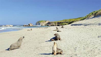 »Höhepunkte Australiens: Reise nach Kangaroo Island«