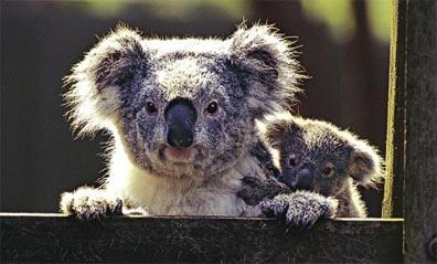 »Australien erfahren: 4-wöchige Rundreise Australien«