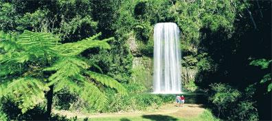 »Australien entdecken: Millaa Millaa Falls, Atherton Tablelan«