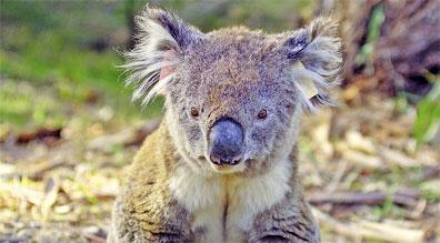 »Australien von seiner schönsten Seite: 26 Tage Mietwagenreis«
