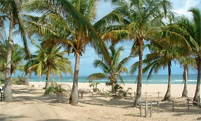 »Traumurlaub an weißen Palmenstränden«