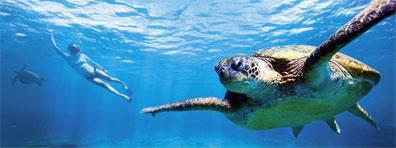 »Best of Australia: Unterwasserwelt am Great Barrier Reef«