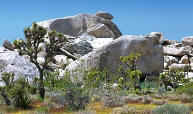 »Berühmte Nationalparks und farbenprächtige Felsformationen«