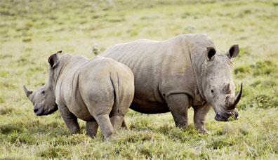»Big Five Safari - Kenia Safari Rundreise«