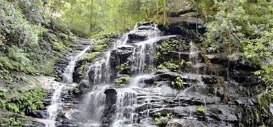 »Känguru-Hüpfer: Reise Blue Mountains Nationalpark«