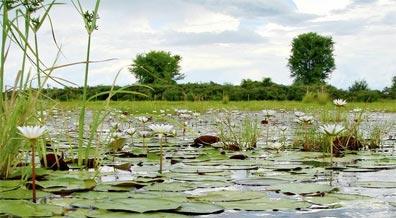 »Botswana & Caprivi: Reise in das Okavangodelta«