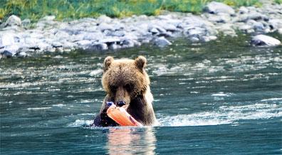»Alaska & Yukon Highlights: Beobachten von Tieren«