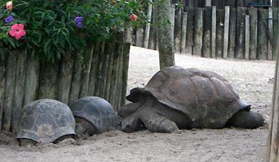»Große und kleine Landschildkröten beobachten«