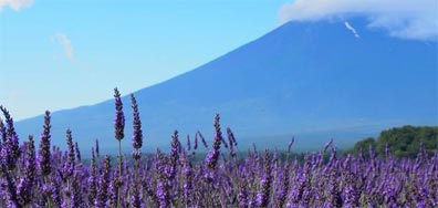 »Discover Japan - 14 Tage ab Tokyo Rundreise«