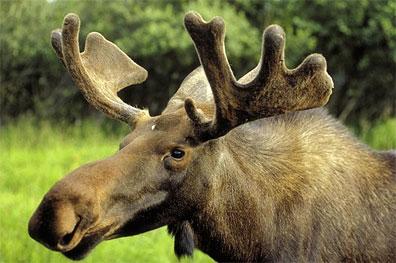 »Mietwagenreise Alaska & Yukon Highlights«