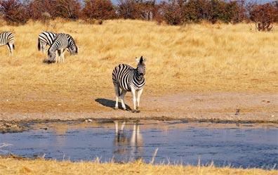 »Reise Etosha Nationalpark - Erlebnis Namibia mit Kaokoland«