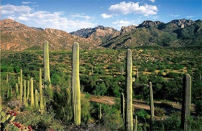 » Erlebnis Westen: Organ Pipe Cactus National Monument «