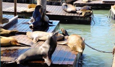 »Erlebnis Westen: Pier 39, San Francisco«