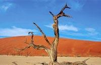»Erholen & Entdecken: Faszination Namibia Mietwagenreise«