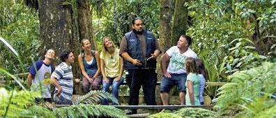 »Auf den Spuren der Maori: Footprints Waipoua«