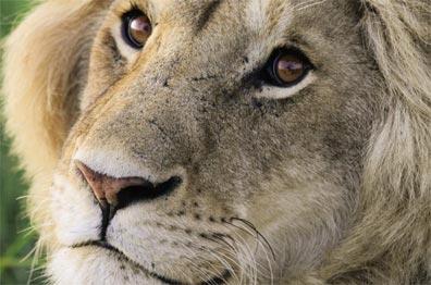»Große Tansania Safari - Pirschfahrten«