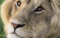 »Große Tansania Safari - Tierparadies Serengeti«