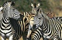 »Faszination Südafrika Studienreise«