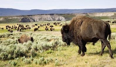 »Im Reich der Büffel und Cowboys - Reise ab/bis Denver«