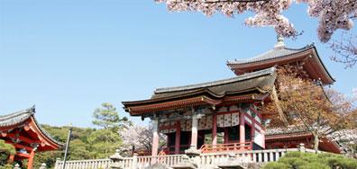 »Kirschblüte in Japan - Land des Lächelns«