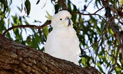 »Känguru-Hüpfer: Tierparadies Kangaroo Island«