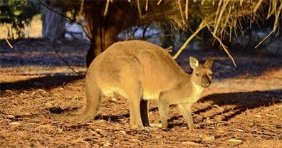 »Känguru-Hüpfer: Bus- / Flugrundreise ab Sydney bis Cairns«