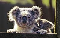 »Australien erfahren - Busrundreisen Australien«