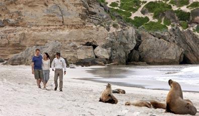 »Naturparadiese und Weltstädte: Kangaroo Island«