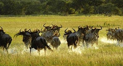 »Südliches Afrika - Safari Kapstadt, Namibia & Victoria Fälle«