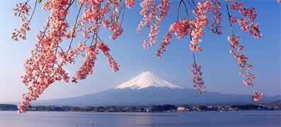 »Große Japan-Reise: Kirschblüte in Japan«