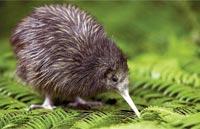 »Kontraste Neuseelands und Australiens«