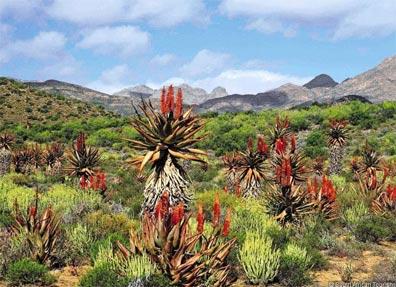 »Südafrika Rundreise - Kontrastreiches Südafrika«