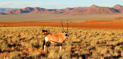»Erholen & Entdecken: Faszination Namibia«