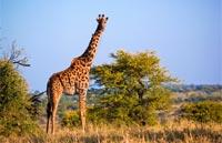 »Preiswerte Namibia Rundreise 2 Wochen«