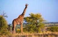 »Namibia & Südafrika - Kombinationsreise«