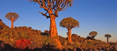 »Atlantik, Dünen und wilde Tiere: Erlebnisreise Namibia«