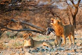 »Namibias Nationalparks - Mietwagenreisen Namibia«