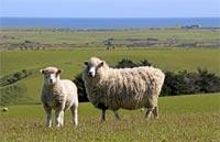 »Naturrundreise Neuseeland - Natur hautnah erleben«