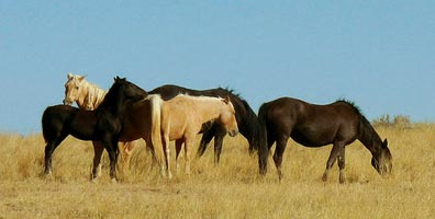 »15 Tage Natur- und Wanderrundreise im Westen der USA«
