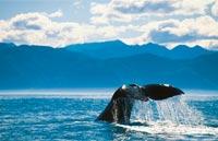 »Naturwunder Neuseelands - Busreise durch Neuseeland«
