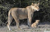 »Wander- und Erlebnisreise zu den Naturwundern Südafrikas«