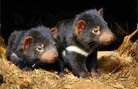 »Naturwunder Tasmanien - Rundreise Tasmanien«