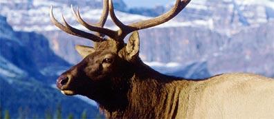 »Naturwunder Westkanada: Erleben Sie die Vielfalt Westkanadas«