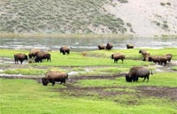 »Naturwunder Rocky Mountains - Erlebnisreise USA«