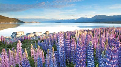 »Neuseeland zum Kennenlernen: Lake Tekapo«